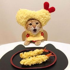 Are you wondering if you can share any of that delicious turkey with your kitty? You should definitely ask your vet before sharing any human foods with your cat, including those on this list! Cute Baby Cats, Cute Funny Animals, Cute Baby Animals, Kittens Cutest, Animals And Pets, Cats And Kittens, Funny Cats, Ragdoll Kittens, Tabby Cats