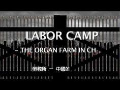 Stop Organ Harvesting in China.    For more information or logo files, please visit:  http://www.facebook.com/Stoporgantheft