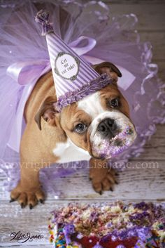Let me eat cake! bulldog photo by Lisa Jane. I will have to do this for Kingston! Dog First Birthday, Puppy Birthday, Animal Birthday, 30th Birthday, Dog Photos, Dog Pictures, Puppy Cake, Happy Birthday Images, Birthday Pictures