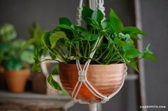 DIY Macrame Plant Holder