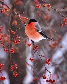 "55.5 mil Me gusta, 330 comentarios - Nature (@nature) en Instagram: ""Follow @nature for more. Perm, Russia. Photo by @myakotnikova_svetlana #nature"""