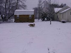 My big boy Rio playing in snow