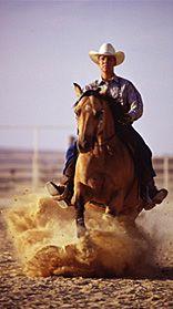 dysli - Westernreiten, Dressur, Western Reitsport, Westernreitweise, Natural Horsemanship, Western