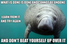"[Image description: A manatee on the right of the frame, looking at the camera. TEXT: ""What is done is done and cannot be undone. Learn from it and try again. And don't beat yourself up over it.""]"