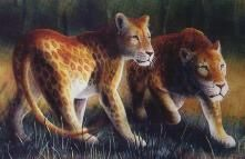 "MAROZI  The mysterious African ""marozi"" or ""spotted lion"", may be a rare natural leopard/lion hybrid or an adult lion which retained its chi..."