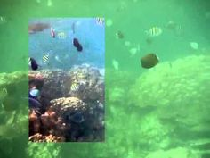 A short clip where a selection has been cleared with Lyynifier for iPAD. Underwater Video, Ipad, Green, Youtube, Youtubers, Youtube Movies