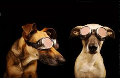 Funny Dog Portraits By Elke Vogelsang