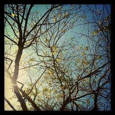 #jardimbotanico #riodejaneiro #arvores #trees #dreamy #sol #sunlight #sun #sky #instalike #instadaily #instagood #instalike #instalove #igda...