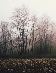 Mystic, Creepy, Tumblr, Halloween, Forests, Amazing, Places, Closer, Nature
