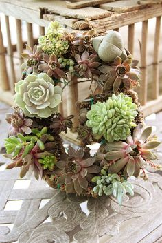 Another tutorial on making a succulent wreath featuring sempervivums.