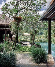 Mandapa,a Ritz-Carlton Reserve (@mandapareserve) • Instagram photos and videos Boho Aesthetic, Photo And Video, Videos, Plants, Photos, Instagram, Pictures, Plant, Boho