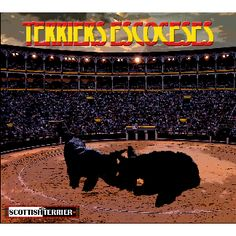TERRIERS ESCOCESES ~ #Spain