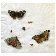 Still Life with Butterflies and Insects | From a unique collection of antique and modern paintings at https://www.1stdibs.com/furniture/wall-decorations/paintings/