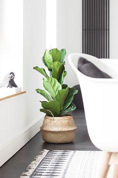 Ich mag eigentlich keine Zimmerpflanzen, aber die hier schon! ♡