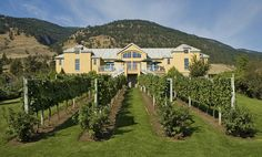 The desert and surrounding country that makes up the South Okanagan also doubles as wine country, bursting with brightness. Organic Soil, Living Off The Land, Wine Festival, Wine Country, Cool Places To Visit, Wines, The Good Place, Vineyard, Around The Worlds
