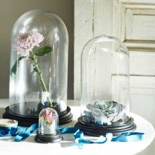 Glass Display Bell Jars