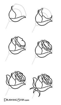 how to draw roses step by step google search roses pinterest rose