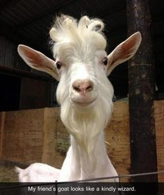 Attack Of The Funny Animals - 51 Pics Farm Animals, Animals And Pets, Funny Animals, Cute Animals, Smiling Animals, Crazy Animals, Wild Animals, Friday Funny Pictures, Funny Animal Pictures