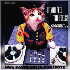 Saturday, my friends. It's take it from the top. A party mix with hip hop cat. Dj Kitty, Armada Music, Party Mix, Kittens, Cats, My Friend, Friends, Hip Hop, Stationery