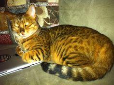 Minxy Cat   Pawshake