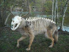 Image result for amazing taxidermy