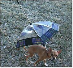 Pet Umbrella- i cant decide if he would enjoy it or be afraidof it