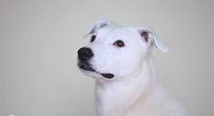 Surdo, cão aprende língua de sinais e recomeça a vida