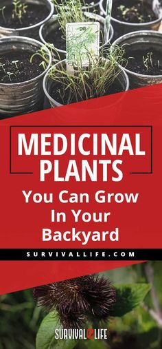 Medicinal Plants | Medicinal Plants You Can Grow In Your Backyard | Survival Life