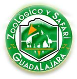 Guadalajara -- Mexico