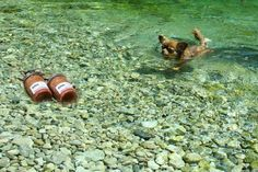 Swim for #hufu