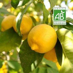 Cultiver un jardin partir de d chets 5 plantes faire - Faire pousser citronnier ...