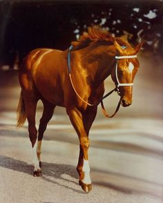 Secretariat at the Belmont is one of equine photographer Tony Leonard's most well-known photos. It was his wife Adelle's idea to airbrush the groom out of the photo. Mr. Leonard passed away on July 14, 2012. Big Red died in 1989.