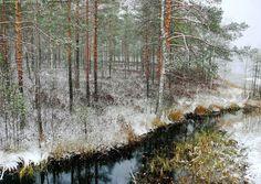 Isovarpuinen rantaräme - isovarpuräme vaiveroräme räme suo puro ranta järvenranta järvi puronsuu pieni joki metsä puu puut vaivero sara ruska syksy talvi lumi ensilumi räntäsade räntä mänty mäntymetsä männikkö suomännikkö rämemännikkö puustoinen turvemaa erämaa suomaisema maisema metsämaisema