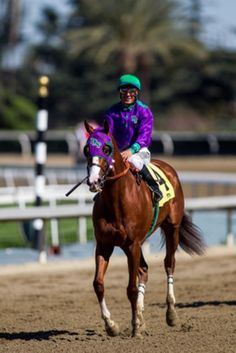 California Chrome  Another photo of The Boss.  Winner of the 2014 Kentucky Derby