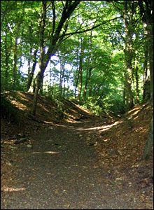 shady woodland paths - Google Search