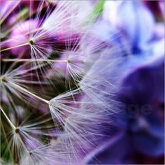 Blowing in the wind - Blowing in the wind