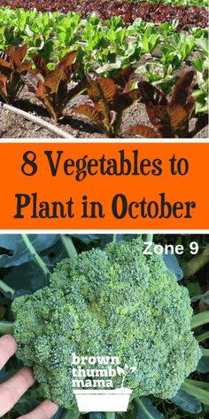 8 Vegetables to Plant in October Zone 9 is part of Kitchen garden Quotes - You might think that it's too cold to garden—but it's not! There are lots of tasty vegetables you can plant in October gardening organicgardening growyourown