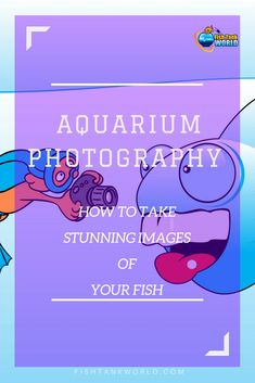 Aquarium photography tips to take stunning images of your aquarium and your fish. Learn the tricks that will improve the photos of your aquarium and master how to make your fish look even more amazing in your images. via @fishtankworld0195