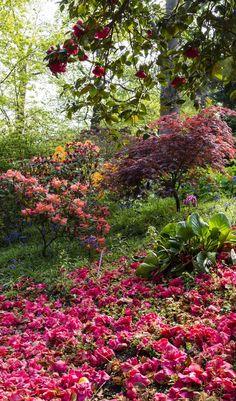 Wisley Park, Inglaterra