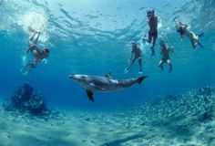 Places to swim with dolphins. Hawaii state is one of the most amazing beach destinations in the world. It provides a relaxing vacation with many unique opportunities. It is stunning in its natural beauty. And it provides numerous opportunities to swim with dolphins. Top choices for doing so include The Waikiki Aquarium and The Dolphin Institute on Honolulu.