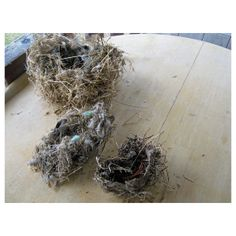Natural Birds Nest  Squirrel  Dove And Finch  Fallen by HomeIdaho, $20.00