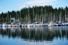 Cap Sante Marina, Anacortes, Washington