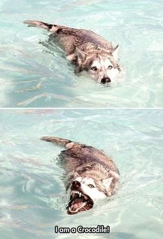 Moon Moon goes swimming...and becomes a crocodile!