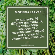 Our Premium 100% Organic Raw Moringa Oleifera Leaf Powder is the one thing you need to fuel your body the way it deserves. Each scoop is packed with anti-inflammatory properties, 92 nutrients, 46 antioxidants, 18 amino acids, and a range of vital vitamins and minerals.⠀ .⠀ .⠀ .⠀ .⠀ #moringaleaves #morinacapsules #herbalsupplements #madefromnature #superfood #superfoods #superfoodlovers #healthyeats #organiceats #veganeats #moringasuperfood #superfoodcapsules #vitamin #moringatree… Moringa Leaves, Amino Acids, Vitamins And Minerals, Superfoods, Powder, Healthy Eating, Range, Organic, Instagram