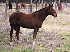 Horses - http://www.1pic4u.com/blog/2014/09/04/horses-3/