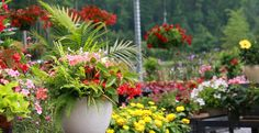 Mixed annual container combos