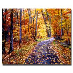 Trademark Fine Art David Lloyd Glover 'Leaf Covered Road' Canvas Art