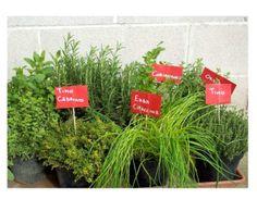 Le piante aromatiche popolano orti, giardini, terrazzi e balconi, utilizzate per aromatizzare i cibi e produrre essenze profumate per la casa, possiedono anche un aspetto estetico, che le