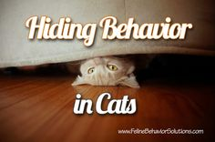 Hiding Behavior in Cats - there are many reasons why cats hide, but do you know when it's a problem?  Read more to find out!