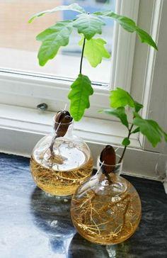 quelle plante aquatique cultiver à la maison